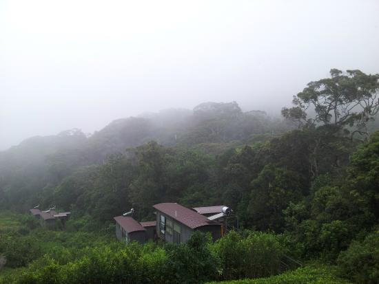 The Rainforest Ecolodge: Misty Forest