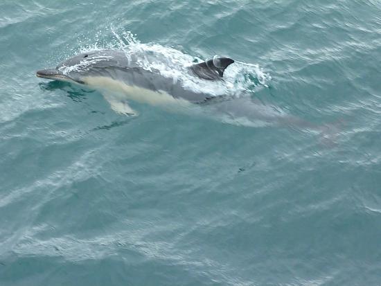 Réserve Naturelle des Sept Îles: Dolphins