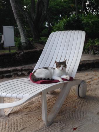 Le Meridien Tahiti: photo3.jpg