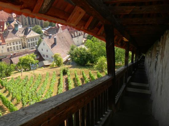 Esslinger Burg: Vineyards from the burg walls