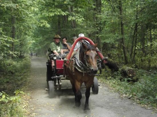 Bialowieza Forest: carro con turisti