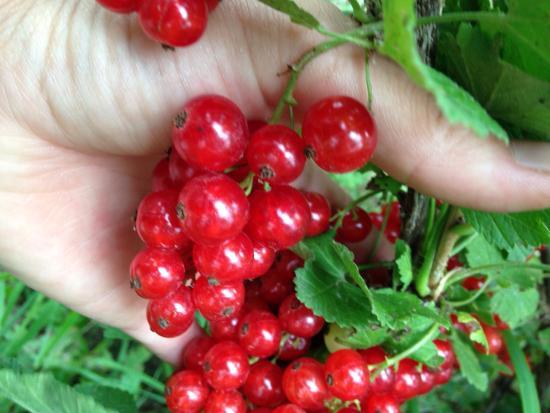 Sarah et Nicolas: Fruits et confitures