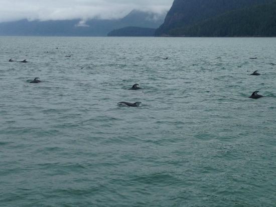 Tide Rip Grizzly Tours: delfini