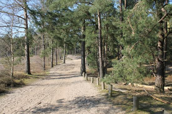 Frensham Little Pond: Sandy Pathway