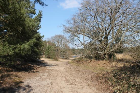 Frensham Little Pond: Easy Walking