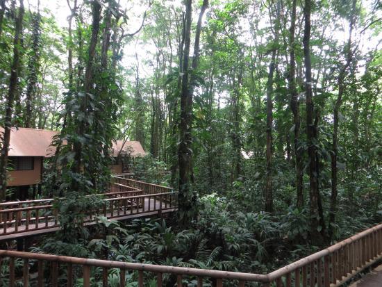 Evergreen Lodge: Cabañas