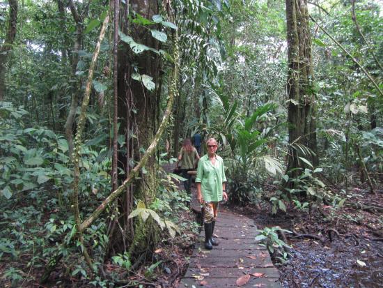 Evergreen Lodge: Parque