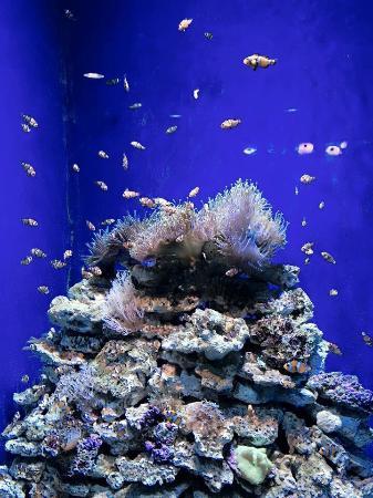 L'Aquarium de Barcelona: photo4.jpg