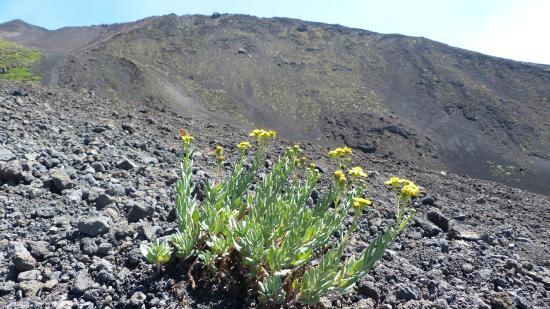 Monte Etna: UN PO' DI VERDE