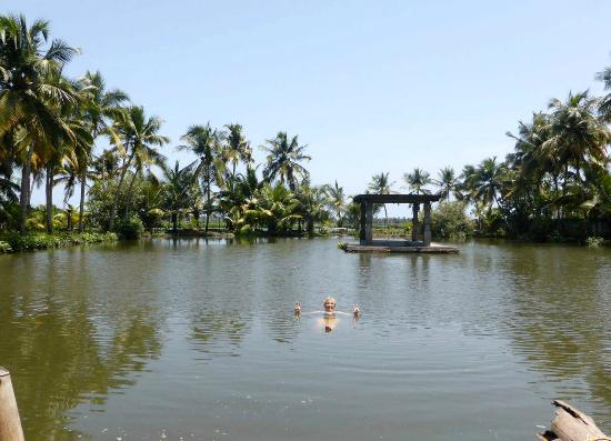 Shravanam Greens: Swimming in the pond...natural backwaters...