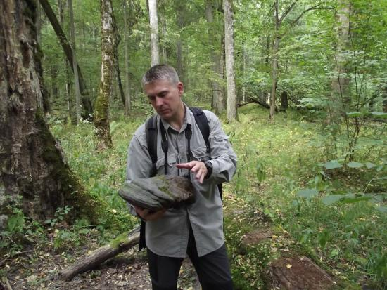 Bialowieza Forest: la nostra guida