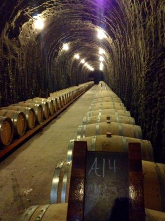 Green Hills Tours: Wine cave at Antica.