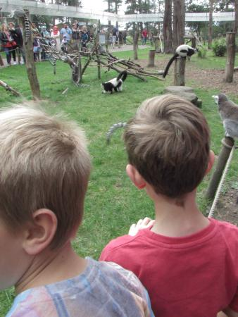 Yorkshire Wildlife Park: Up close and animated - the Limas