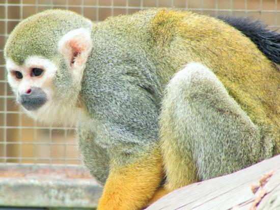Yorkshire Wildlife Park: More cheeky monkeys