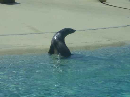 Blackpool Zoo: missed the seal show :0(
