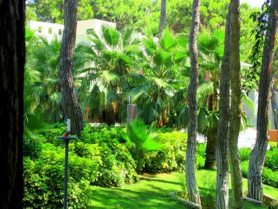Turquoise Resort Hotel & Spa: kert