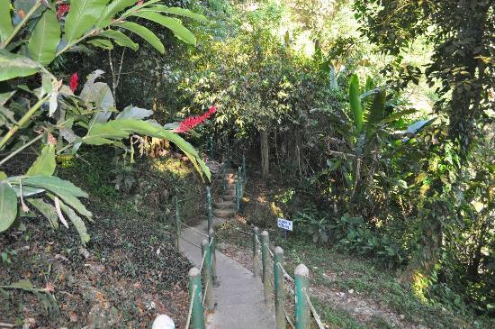 Cascadas de Misol-Ha: Тропинка вокруг водопада
