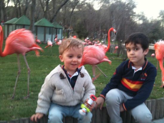 Bilde fra Zoo Aquarium de Madrid