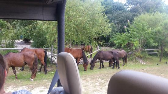 Wild Horse Adventure Tours: We saw a bunch of horses