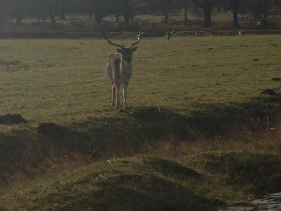 Bradgate Park: New Years Day 2015