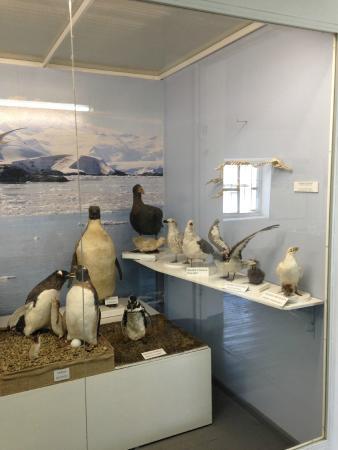 Museo Maritimo y del Presidio de Ushuaia: Animais embalsamados