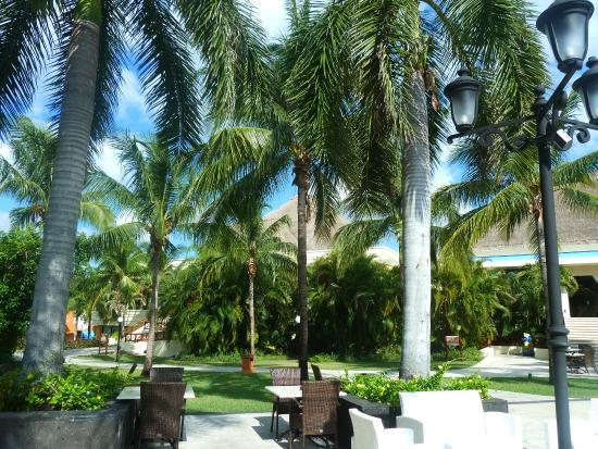 Grand Bahia Principe Coba: love palmtrees