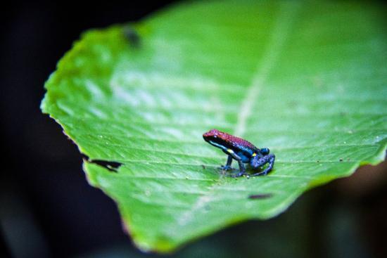 Guacamayo Ecolodge: Fauna
