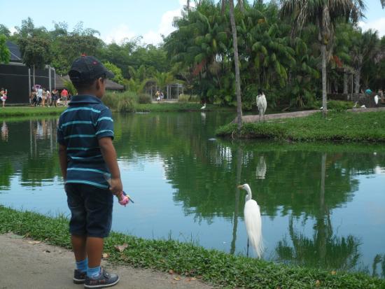 Mangal das Garcas: Lago, vista com Garças