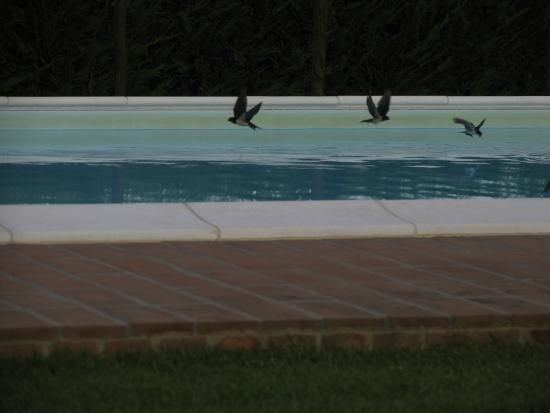 Agriturismo dell'Arnano: Arnano balestrucci sulla piscina al tramonto