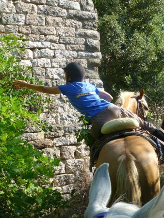 Centro di Equitazione Marana: Veronika the owner picking capers at the castle
