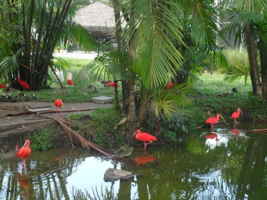 Mangal das Garcas: Guarás
