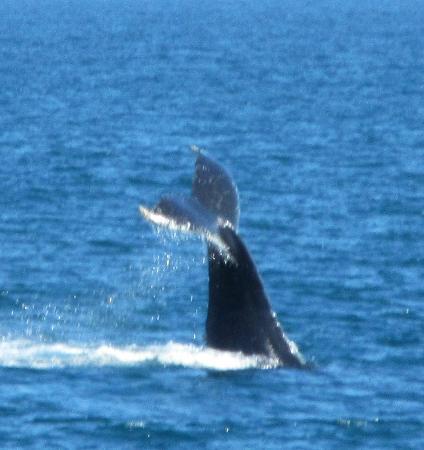 Stan Stephens Glacier & Wildlife Cruises: Whale