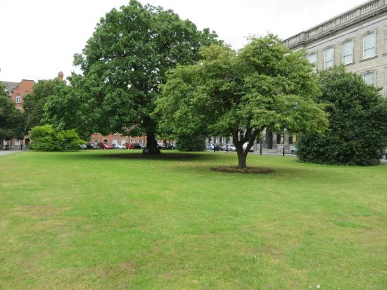 Trinity College: Some trees