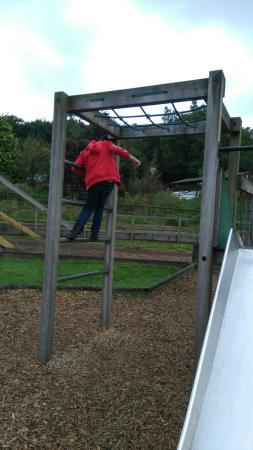 Bowland Wild Boar Park: Wild boar Park 2015