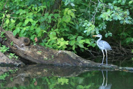 Tiergarten: Wildlife