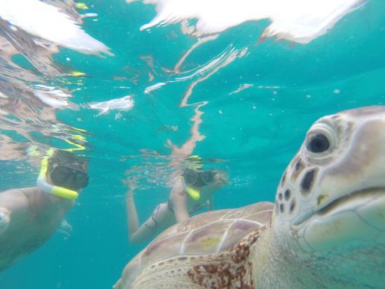 Thriller Ocean Tours: Turtles