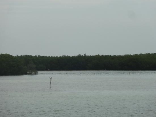 Posada Inn El Faro: Vista de manglar