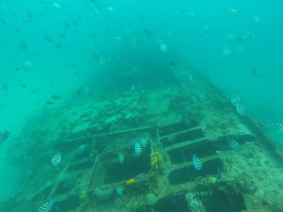 Thriller Ocean Tours: Sunken Ship