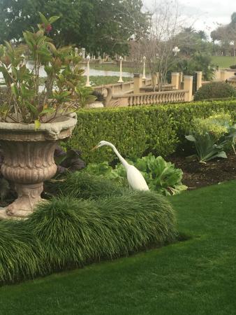Bilde fra Hollis Garden