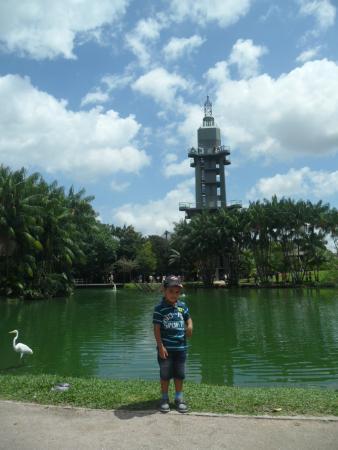 Mangal das Garcas: Torre de belém, vista do lago