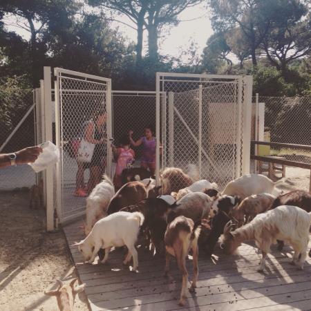 Parco Naturale di Cervia: Parco naturale Cervia