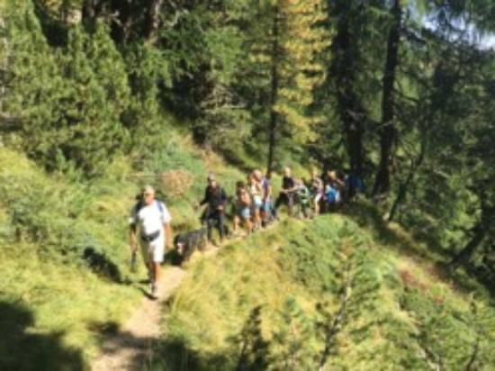 Family & Wellness Hotel Shandranj: escursione in gruppo Shandranj  a Pampeago -Monte Agnello   Monte Cormon - Tesero