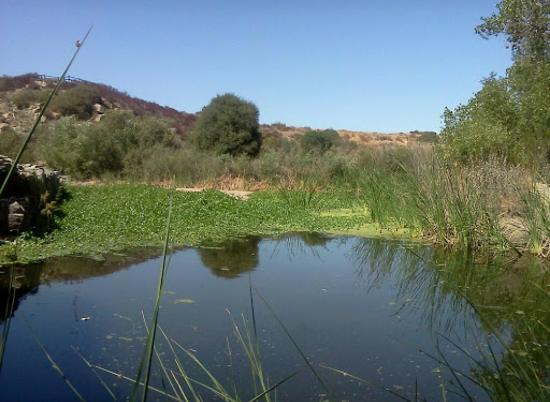 Mission Trails Regional Park: Pond next to dam