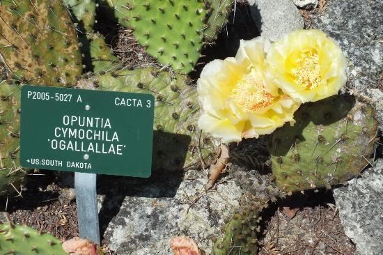 Botanical Gardens (Botanisk Have): dans le jardin