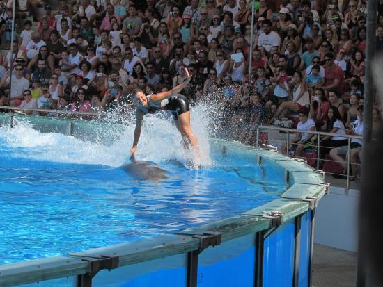 Jardim Zoologico: Apresentação de golfinhos
