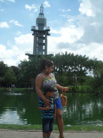Mangal das Garcas: Torre de Belém ao fundo