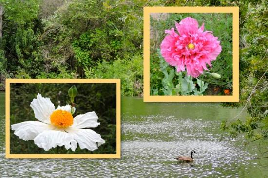 El Dorado Nature Center: Nature's beauty is found throughout the Center.