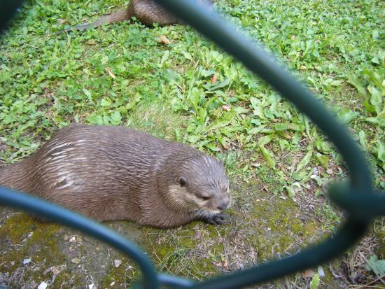 Animal in 'Natuurpark Lelystad.'