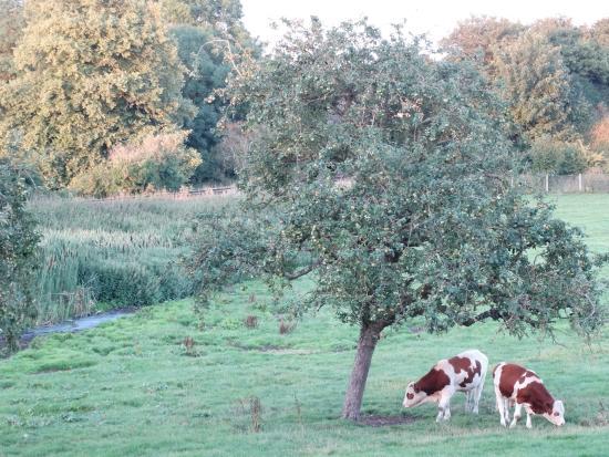 Little Langford, UK: Farm