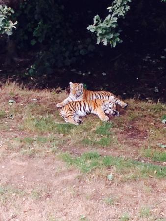 Bilde fra Yorkshire Wildlife Park